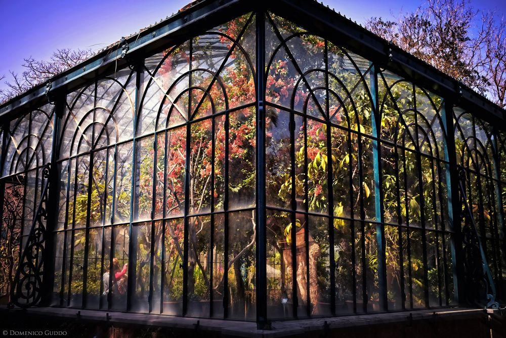 Jardin d'Hiver by domenicoguddophotoart