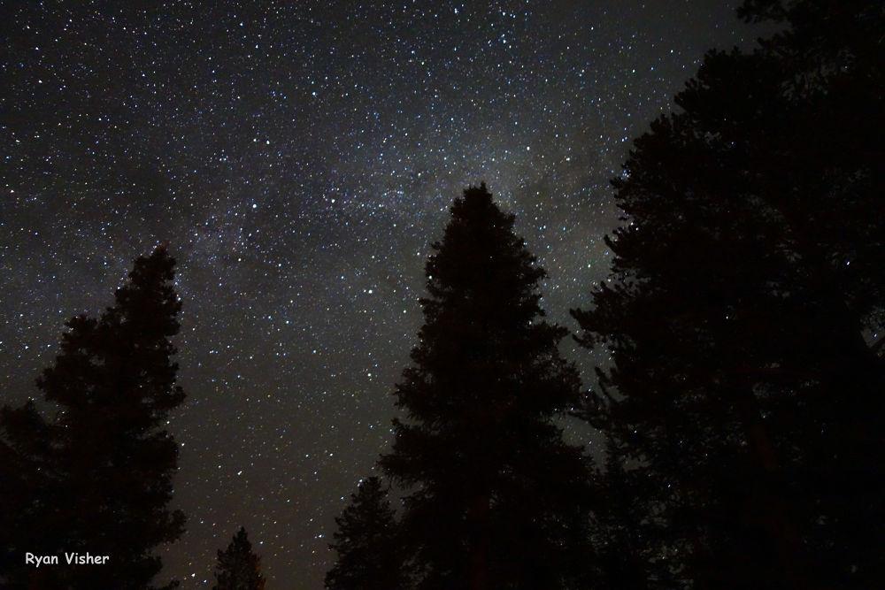 Photo in Random #night sky #sky #stars #silohette #trees #uintas #nature #galaxy #milkyway #ypa2013