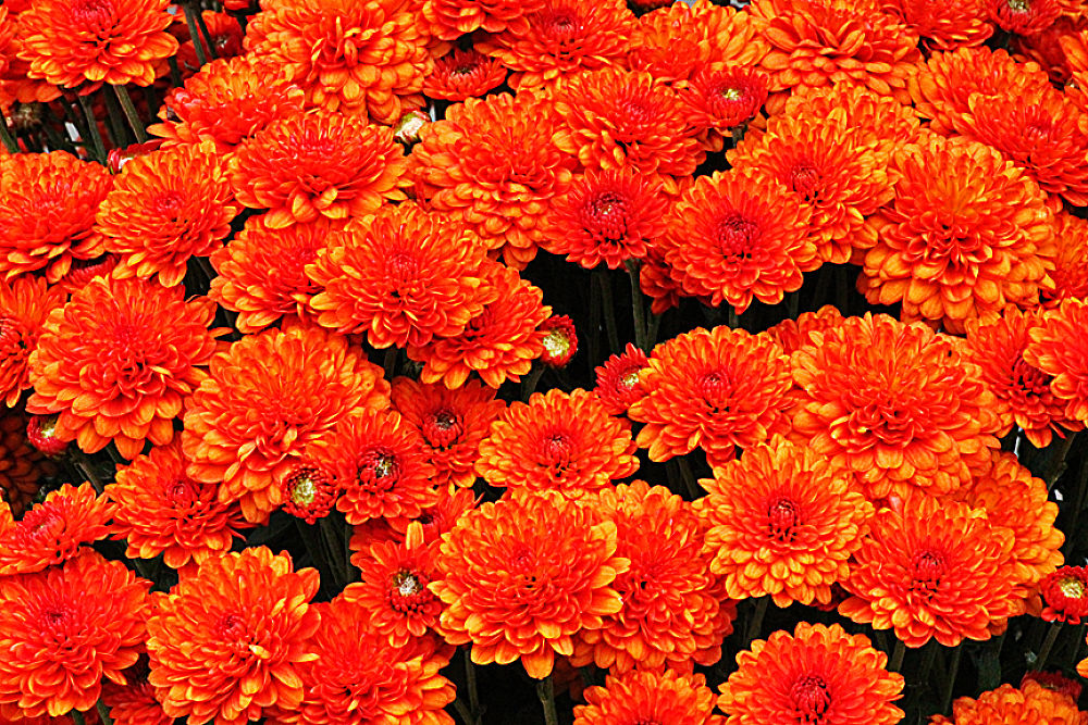 Photo in Nature #flores naturais #paisagens diversas