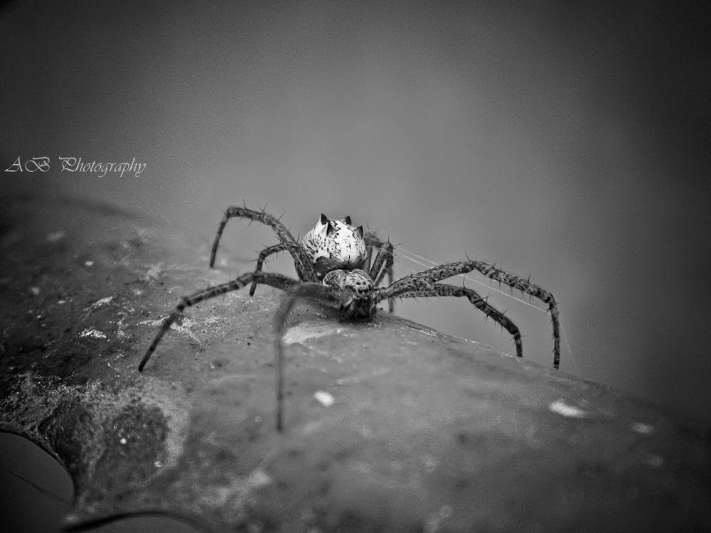 Photo in Random #amazing #wild spider