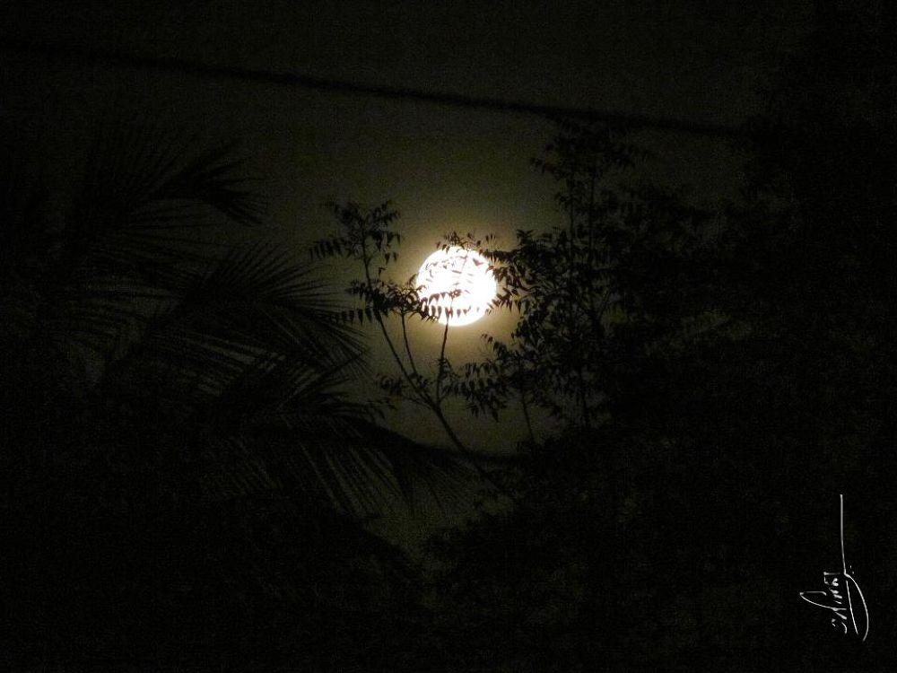 beauty of the night.jpg by anindyanandan123