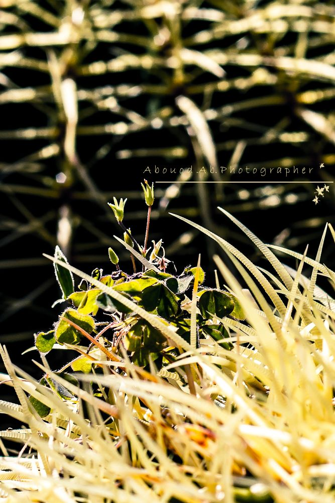 A rose among the weeds by Abouod