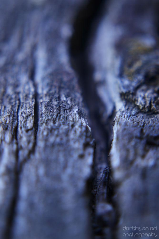 Photo in Macro #macro #wood #color