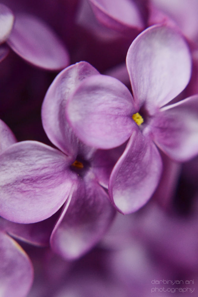 Photo in Nature #flower #nature #color #photo #macro