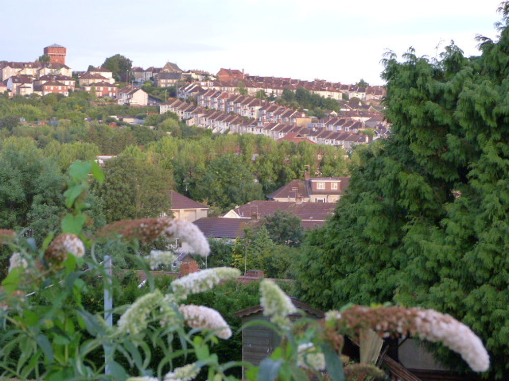 Buddleia and rows of Houses by stevecocking