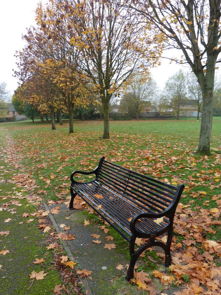 Park Bench in Autumn by stevecocking