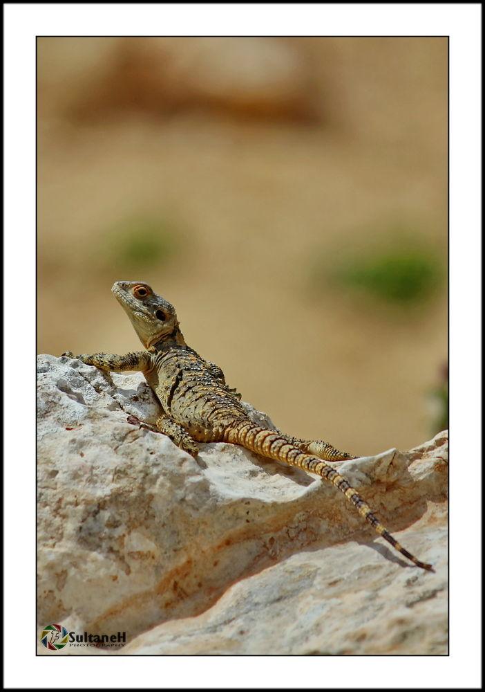 Lizard by fadisultaneh