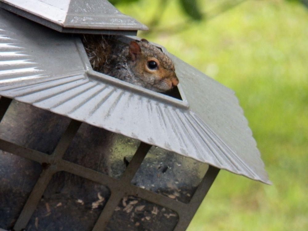 squirrel proof 002 (640x480).jpg by rgoohs1