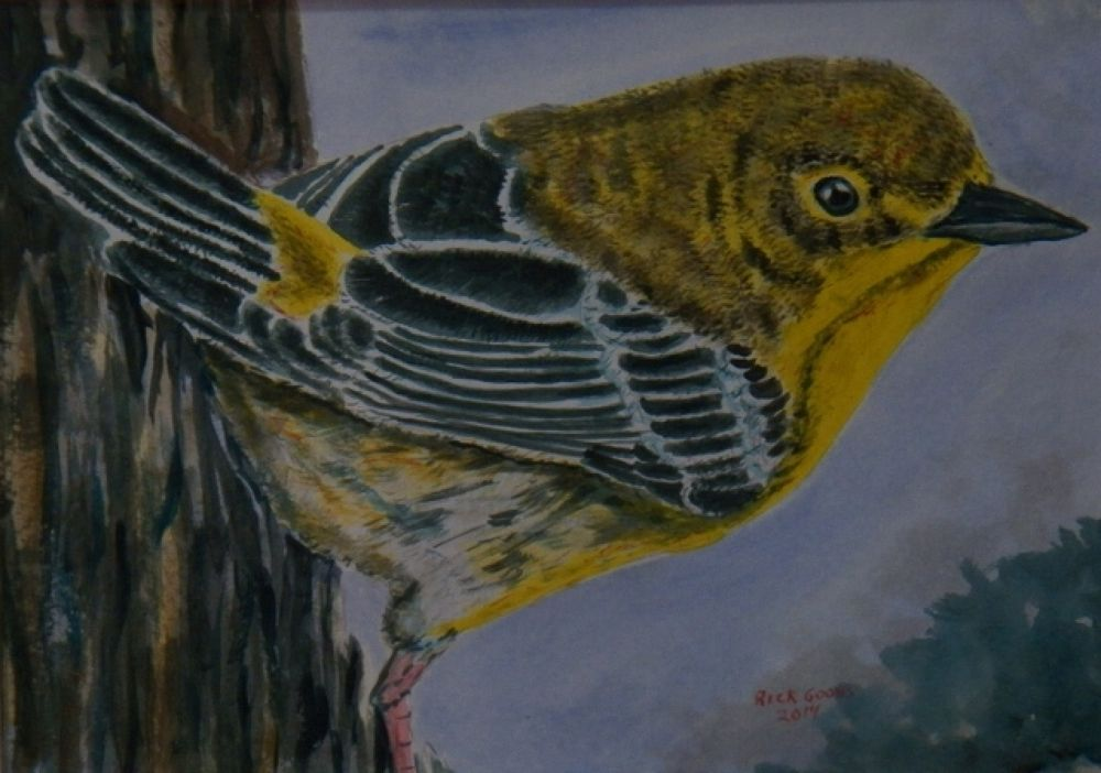 Pine warbler watercolor painting from my photograph. by rgoohs1