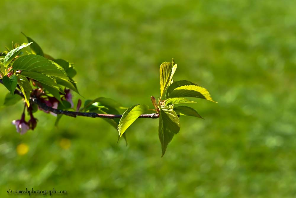 Baby leaves by umeshphotograph