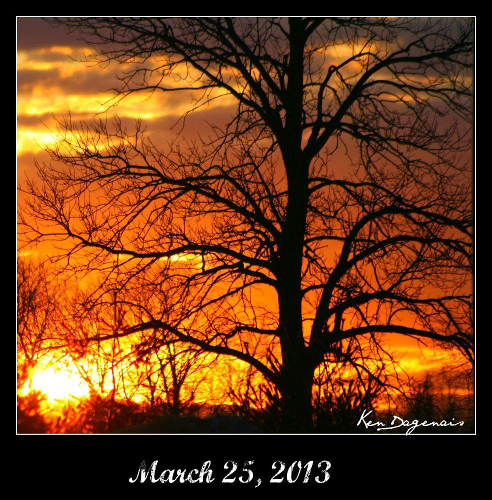 Beautiful Tree.jpg by kennethdaggg