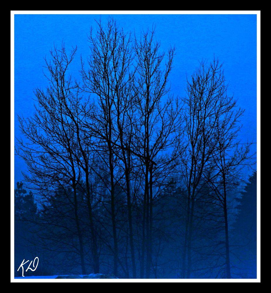 BLUE VELVET by kennethdaggg
