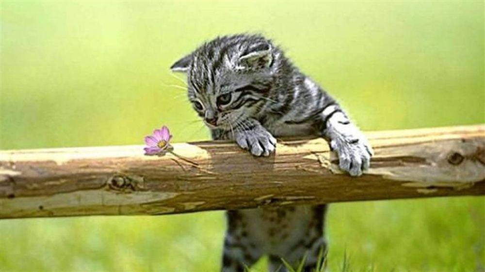 238508-1366x768-kitten by hardeepsingh