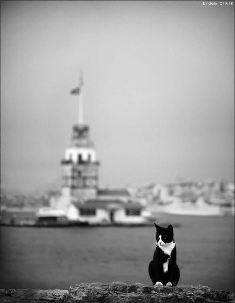 Maiden's Tower and Cat by erdem