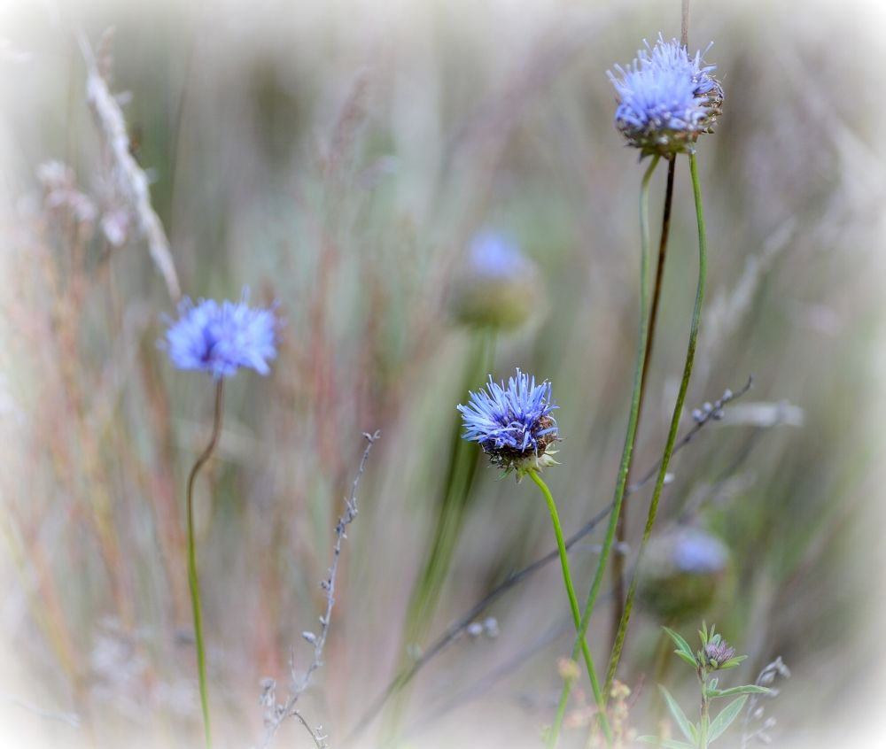 On the meadow by habibi27