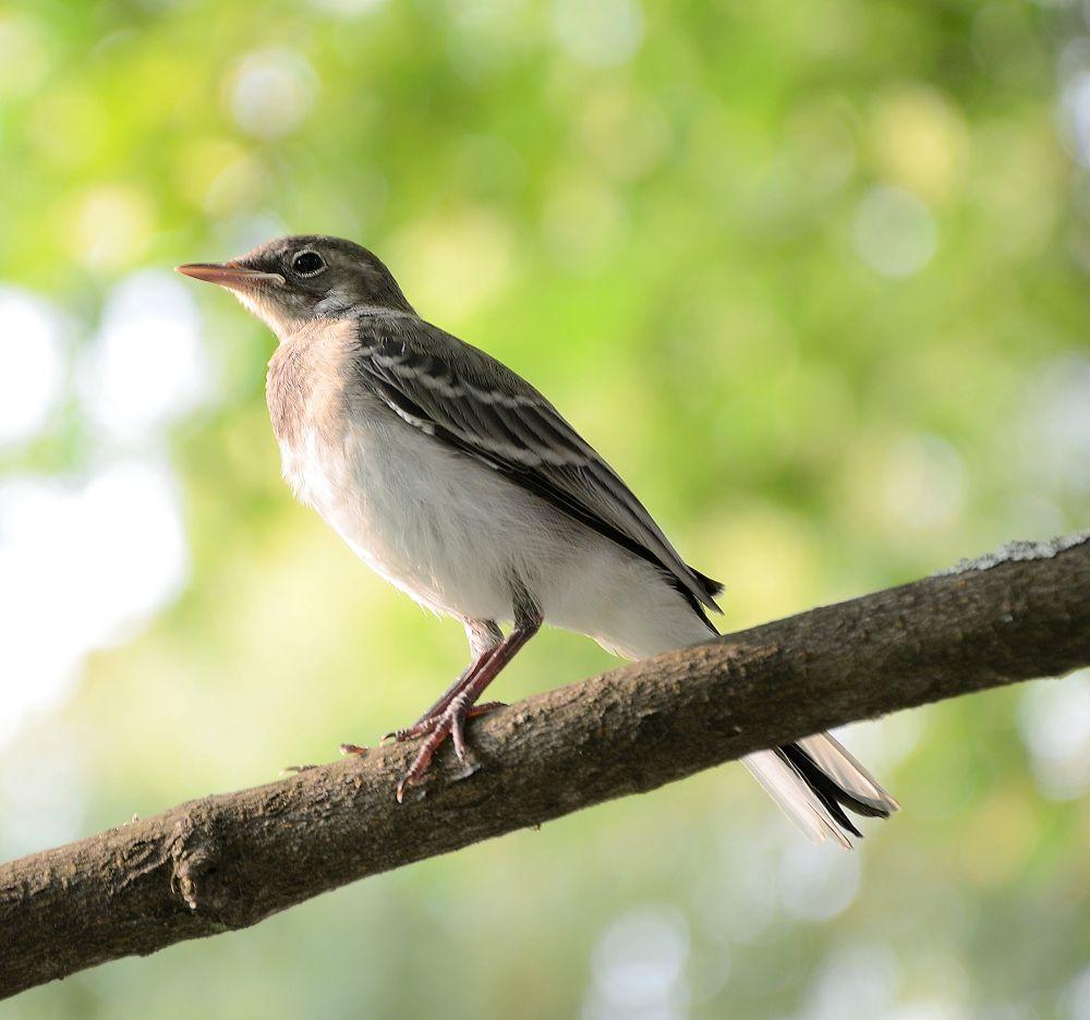 A bird by habibi27