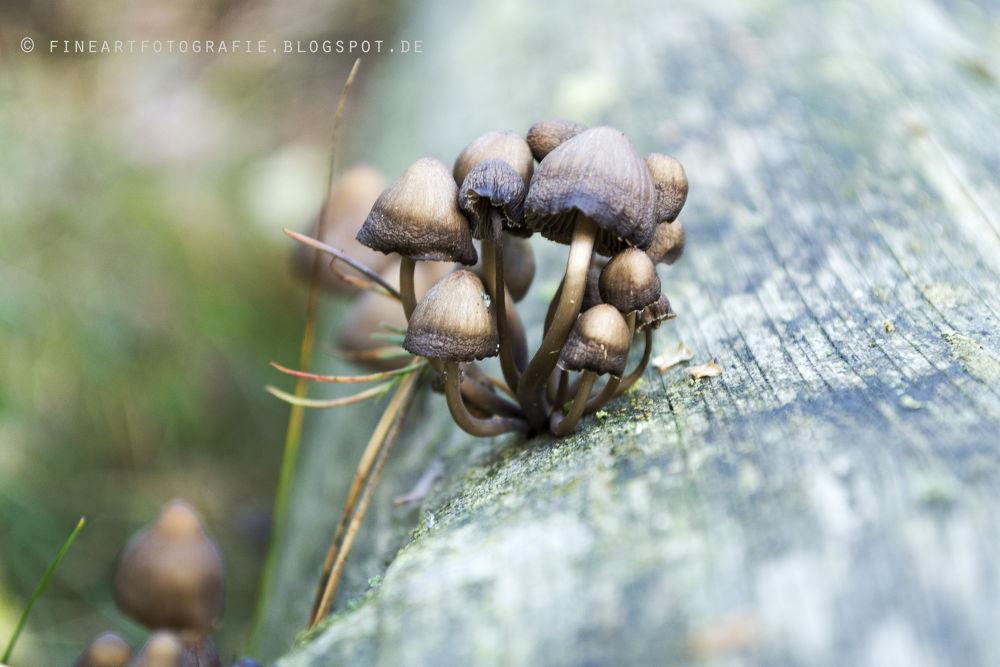 Photo in Nature #pilz #pilze #wald #holz #morsch #verwittert #baum #baumstamm #mushroom #mushrooms #wood #nature #forest #weathered