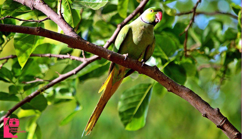 Parrot (Stop Looking Me :p) by Umee