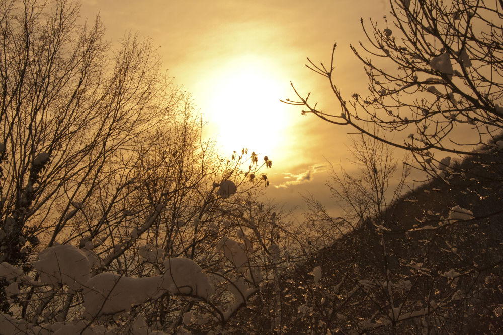 Snow ! by giuseppevalle