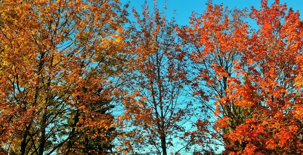 Photo in Random #trees #color #leaves