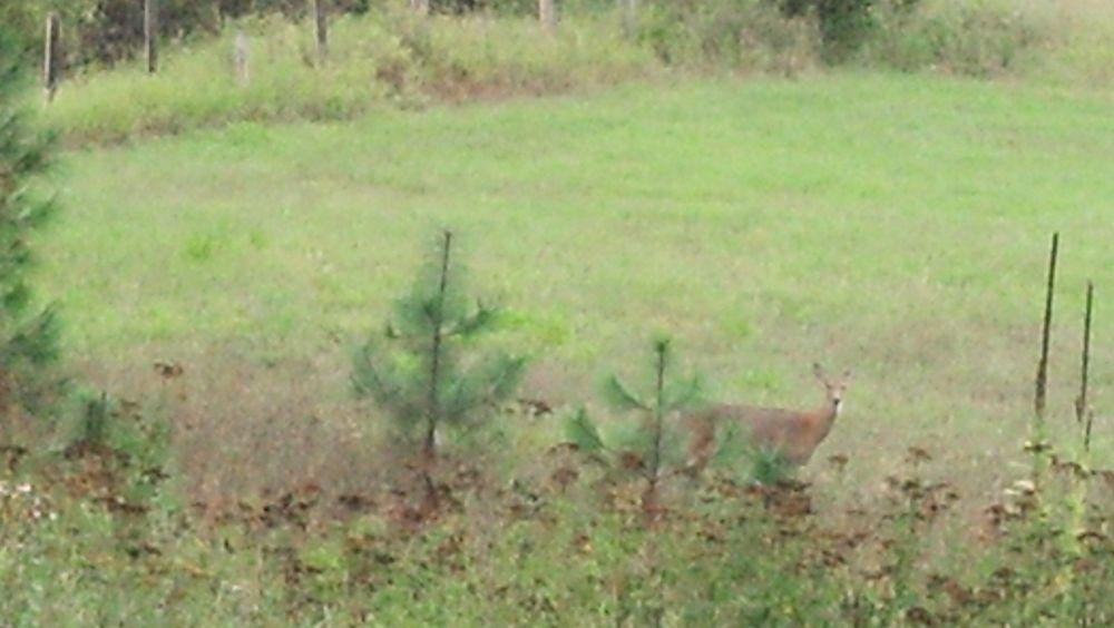 Photo in Random #deer #grass #woods