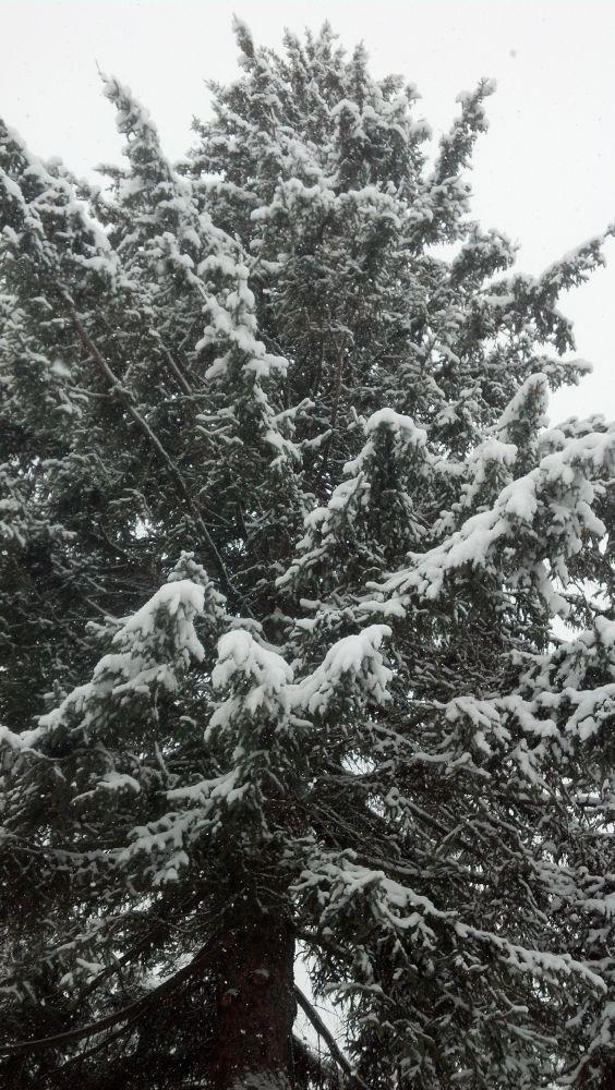 snowy day by gpoledna6