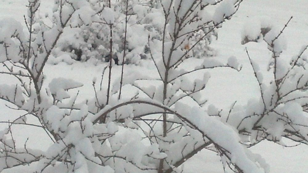 Photo in Random #snow #white #branches