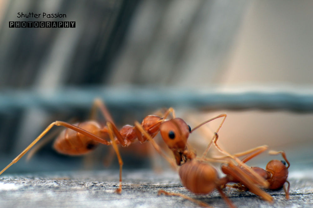 Ants in Action by akrudolie