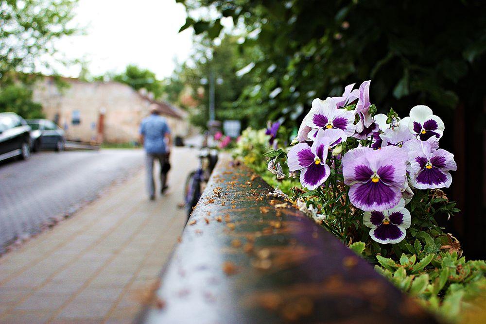 Flowers by Georgiana