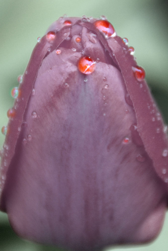 flower by Stiliyan Lezov