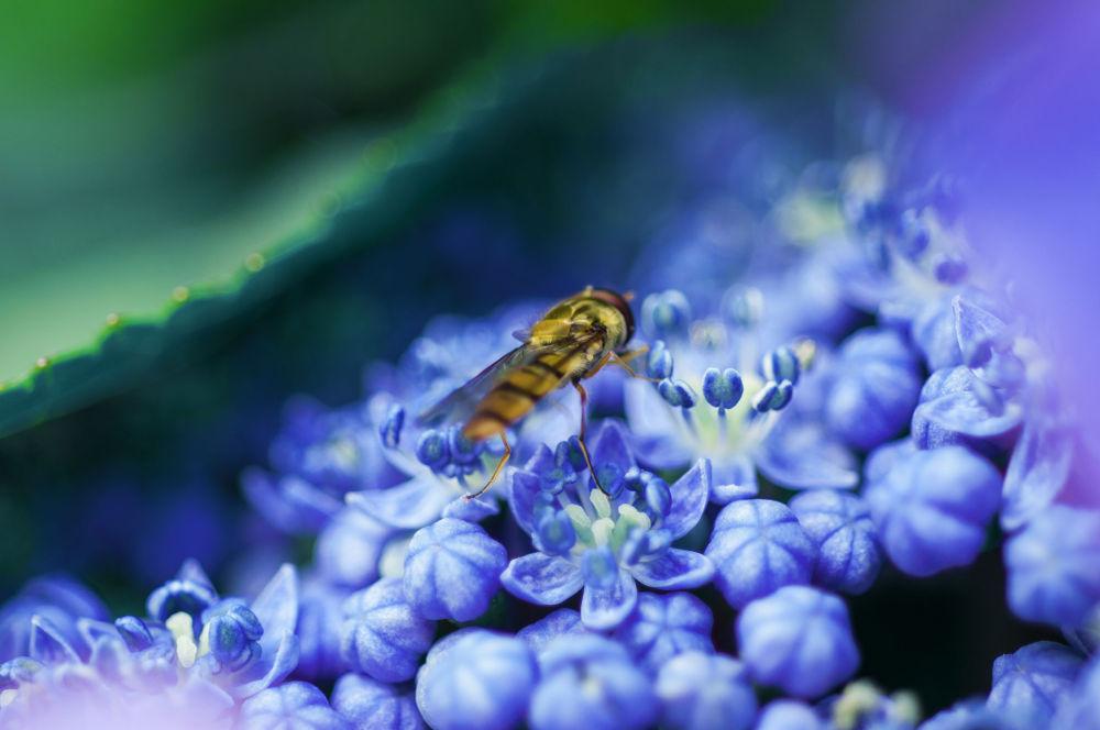 Pure nature    Buy http://deutsch.istockphoto.com/stock-photo-24160204-beautiful-flowers-allure-bees by Mirroroflight