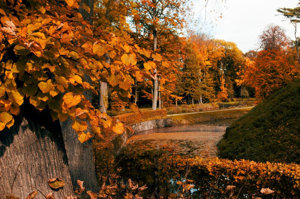 Leafes falling  by Mirroroflight