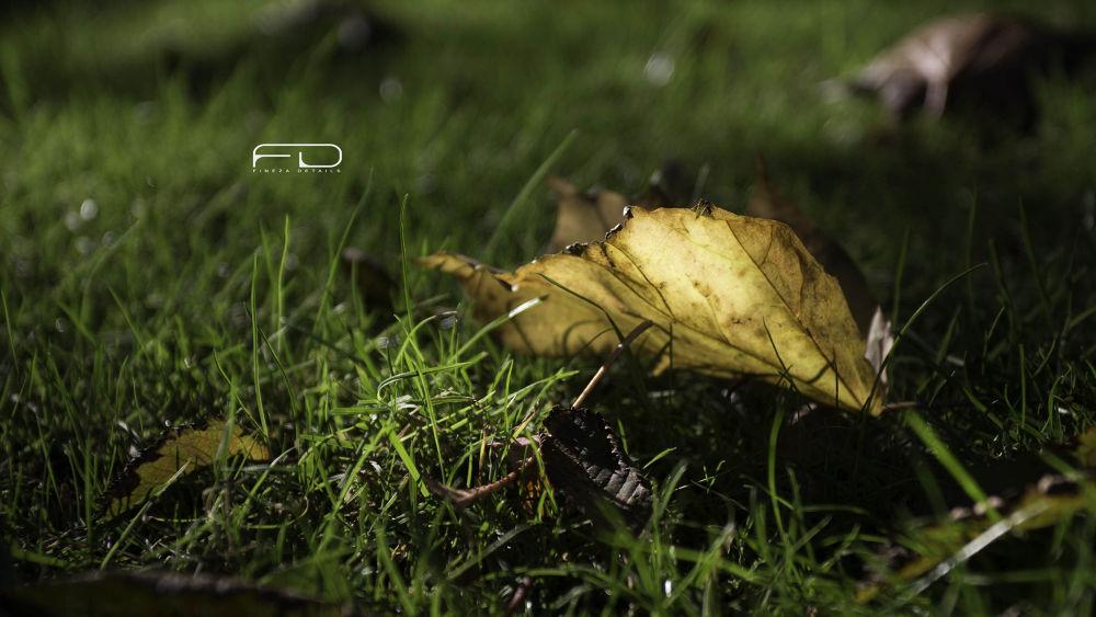 golden leaf by Khalid_Fineza  Details
