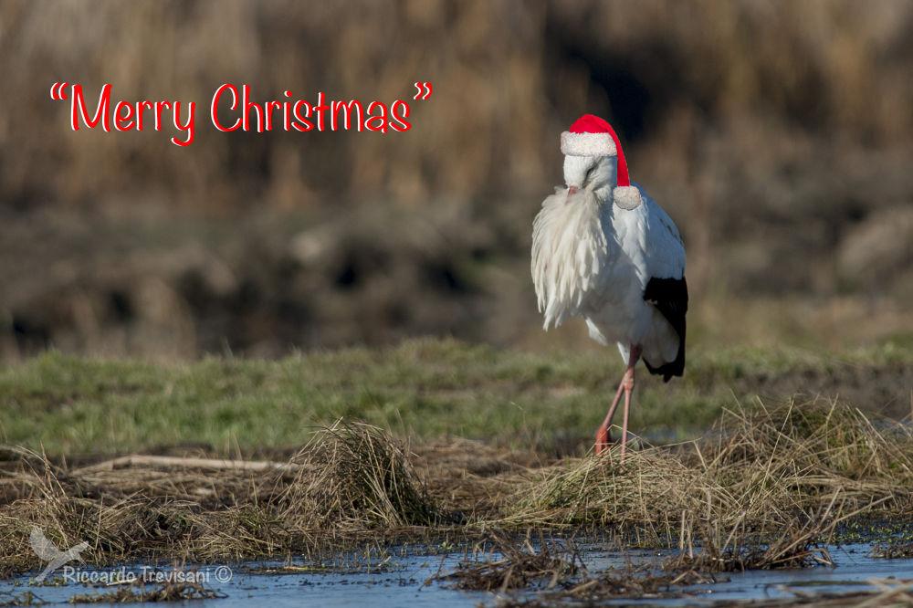 happy Christmas by riccardotrevisani
