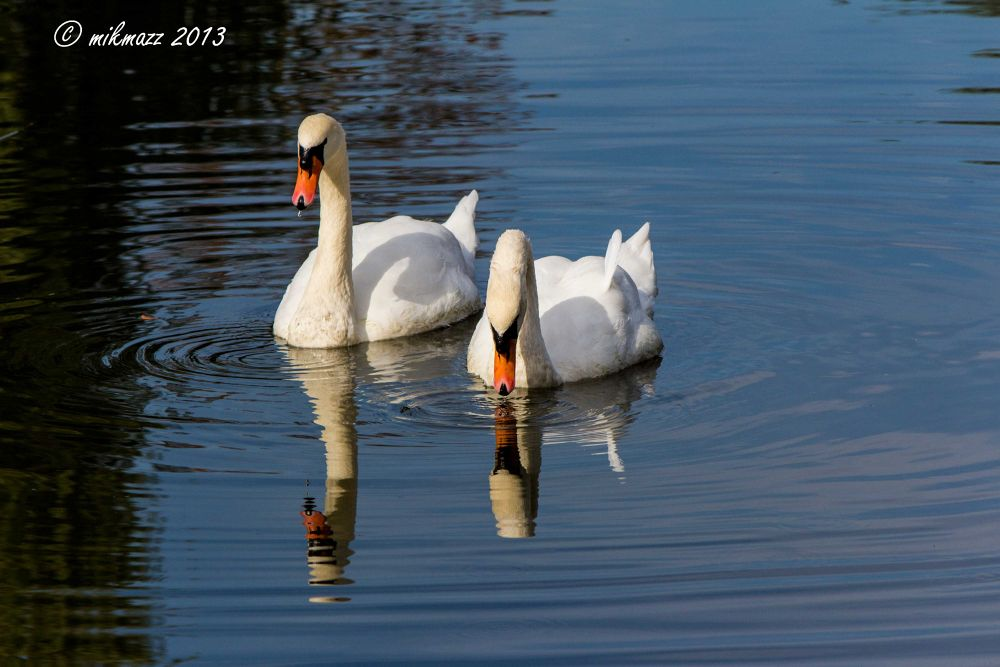 Photo in Animal #animal #nature #parco faunistico valcorba