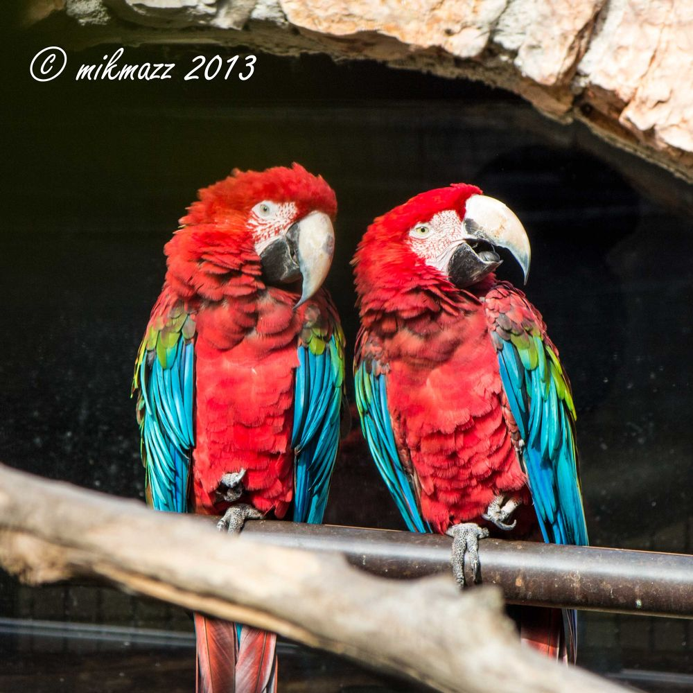 img_4440 by mikmazz