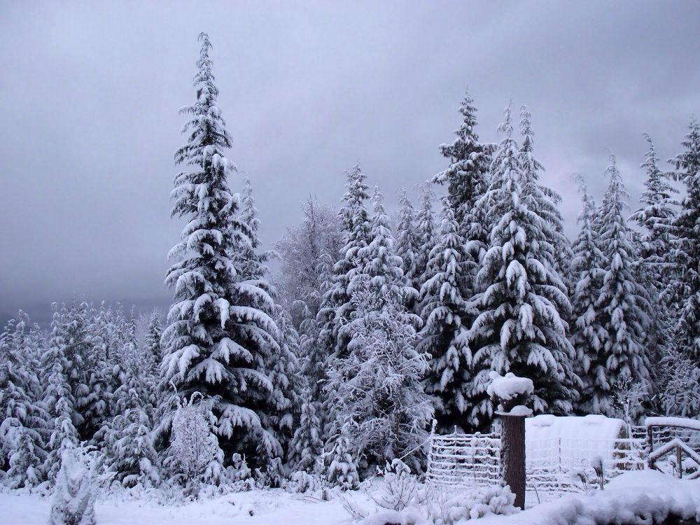 Morning Snow fall  by simonp
