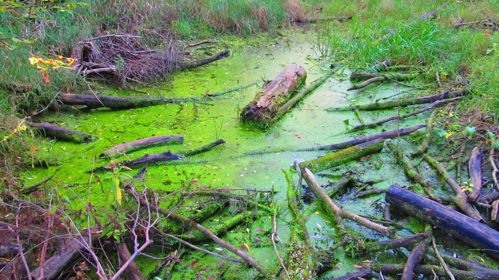 swamp by simonp S&R Photography