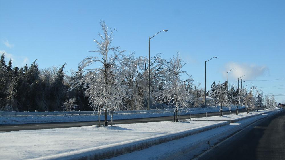 Ice Tree Decos by simonp