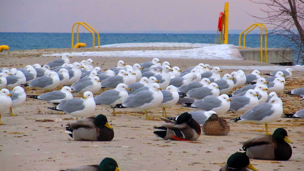 a Flock of Seaguls  by simonp