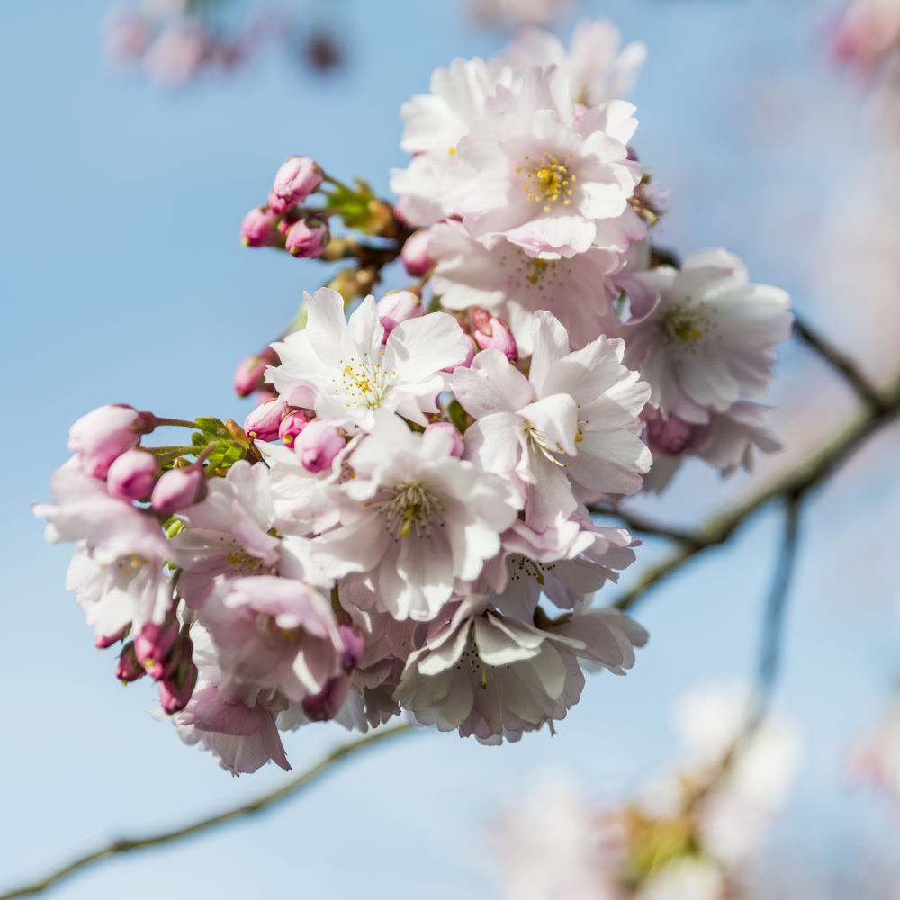 Blossom by wouter rittel