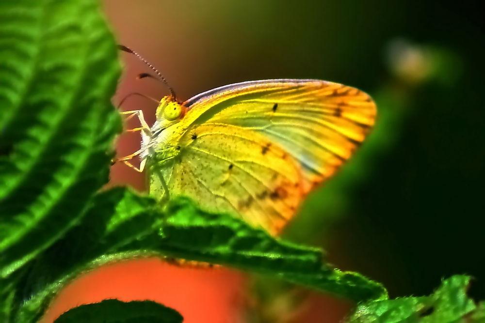 Butterflies (1) by Jorge Coromina