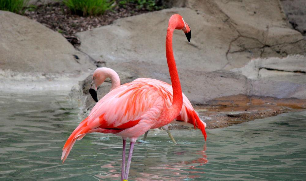 flamingo by joyeeta4ever