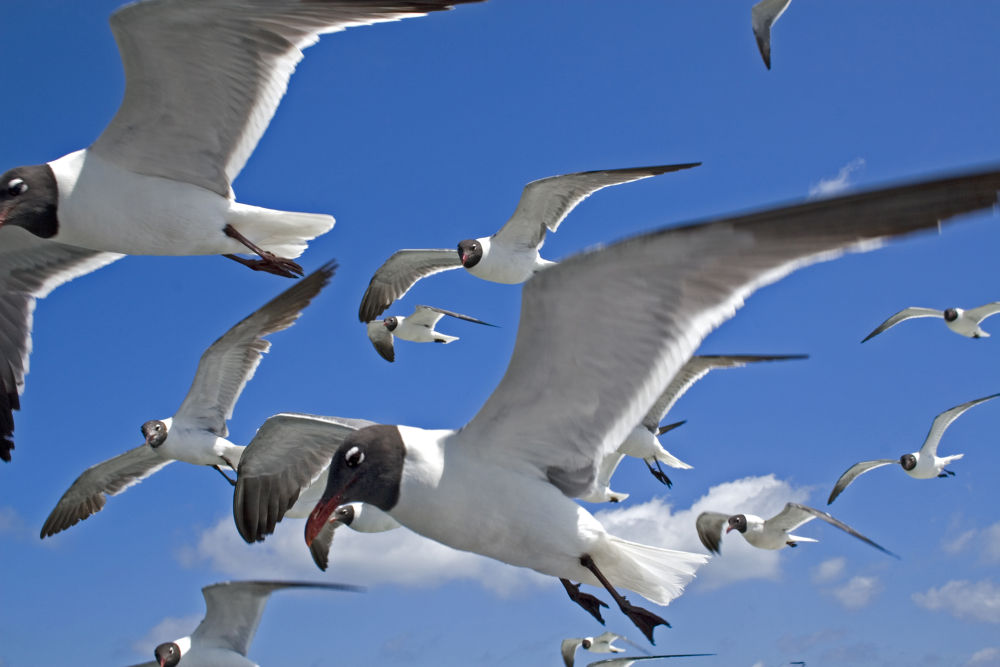 Flying with the birds sm.jpg by helshawk