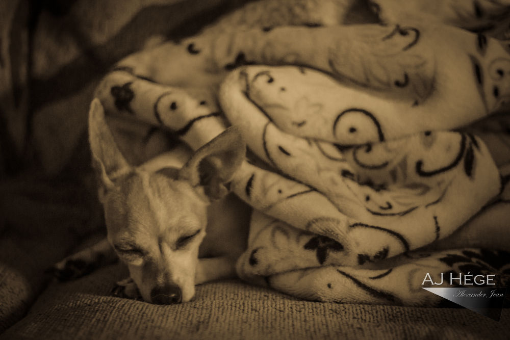 Nap Time for Foxy! by AJ_Hege_Photography