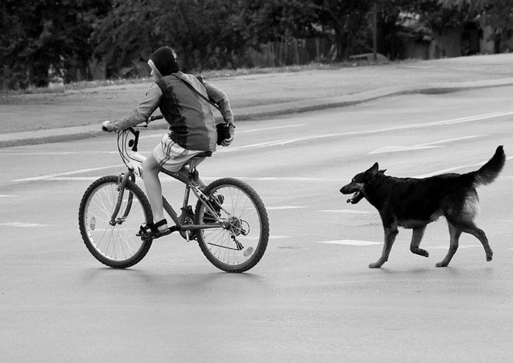 Friends1.jpg by Mihail Dimitrov