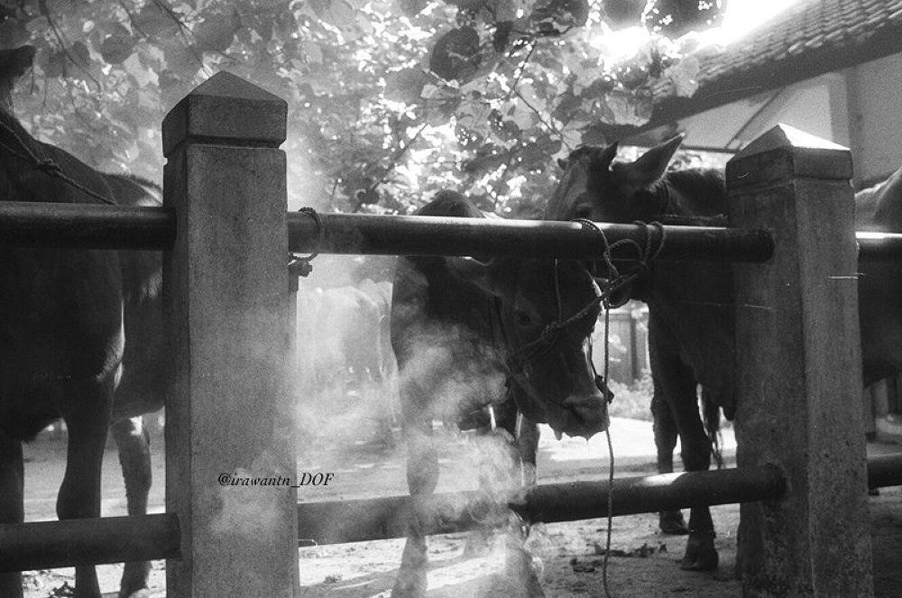 """""""Smoked Beef"""" by irawantn_DOF"""