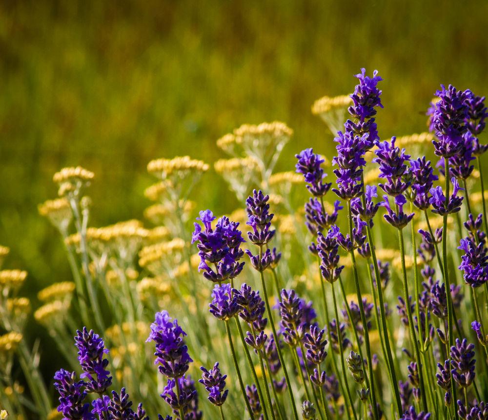 herbs by ulrikefelkel