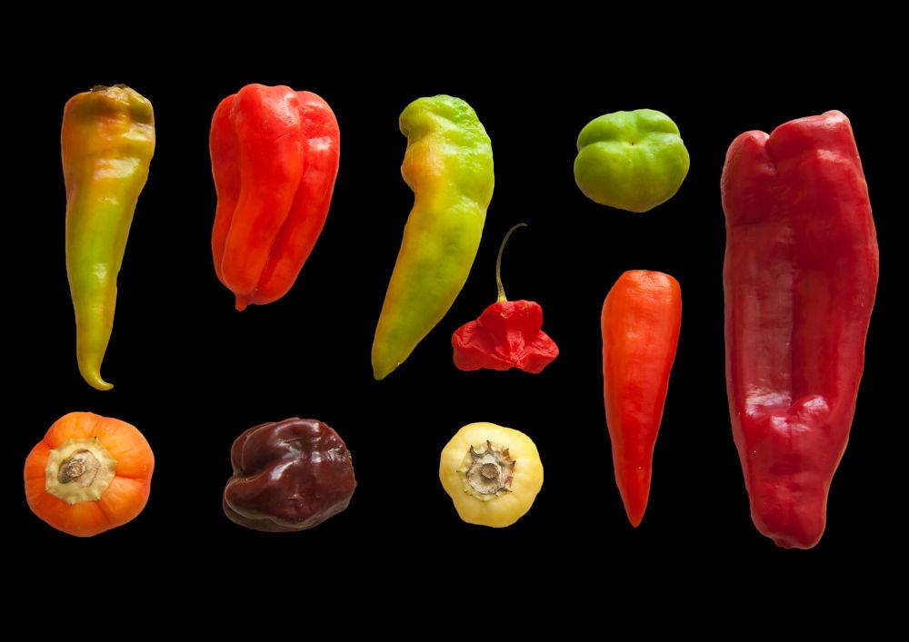 bell pepper by ulrikefelkel