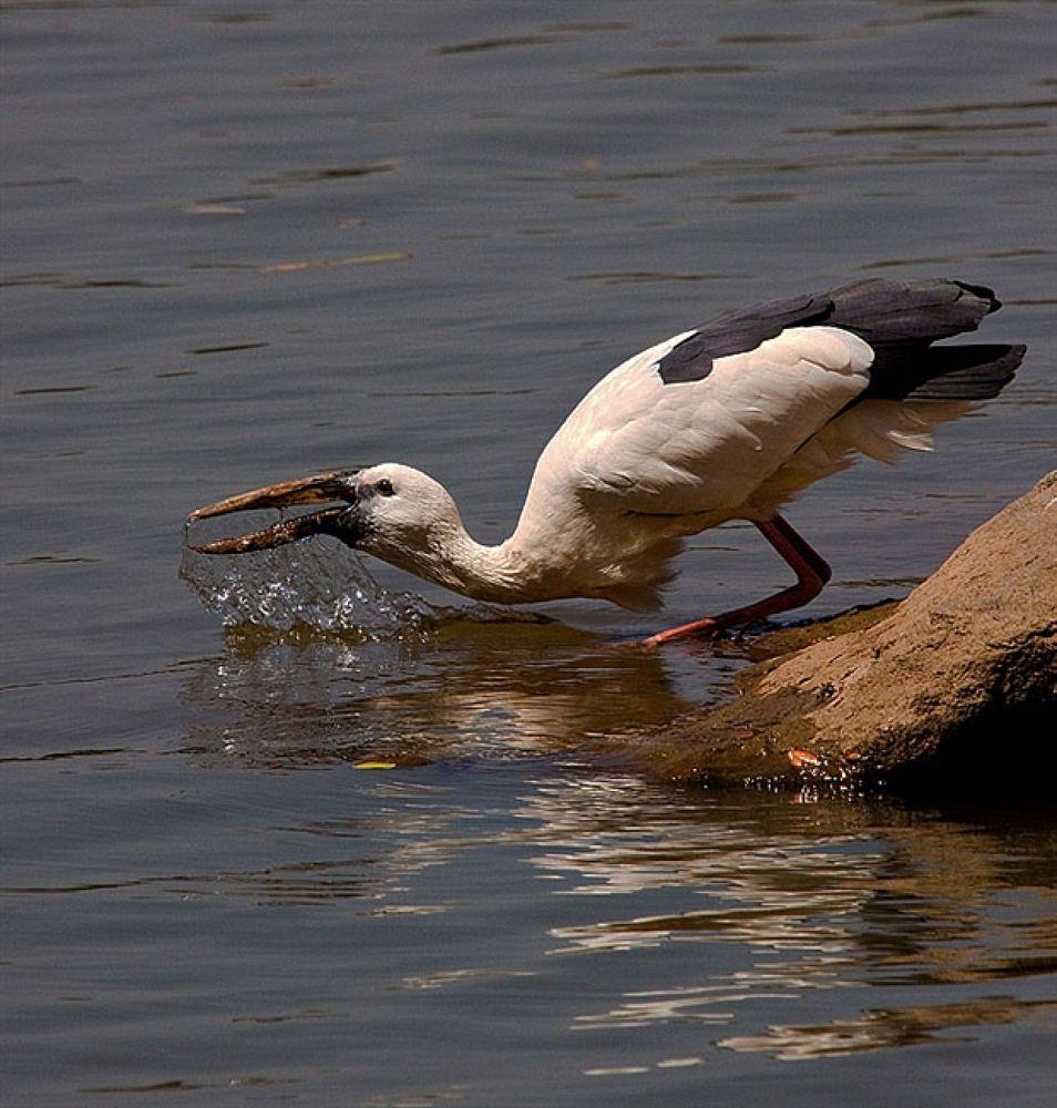 Stork YouPic by blackstallionphotography